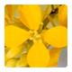 bachbloesem_mustard